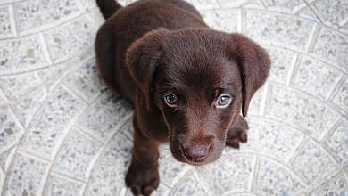 Photo of Where to Buy a Puppy Near Me